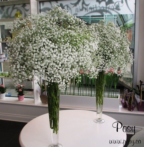 Gypsophelia Baby S Breath In Tall Glass Vases For Church Altar Flower Tall Glass Vases