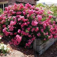 Growing Spectrum - Wholesale Plant Nursery, Hamilton NZ