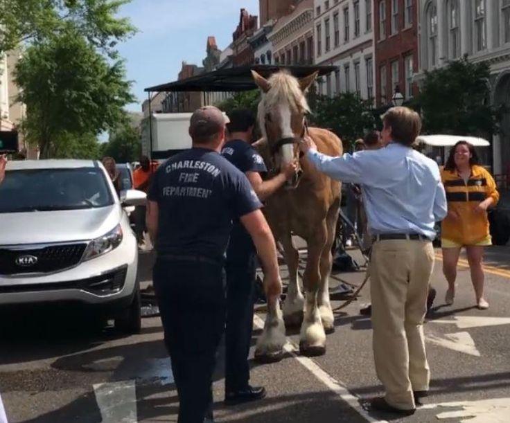 Um cavalo que puxava uma carruagem com dezenas de turistas, em Charlestone, nos EUA, caiu inanimado no meio da estrada. As imagens do incidente deixaram a comunidade local em alerta e já foi solicitado um estudo para determinar a segurança dos animais neste tipo de atividade.
