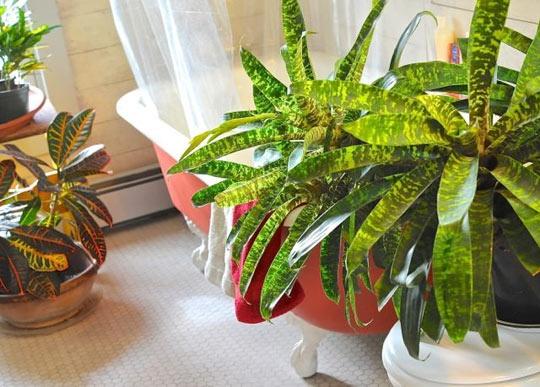 Spring Spa Treatment: Soaking Houseplants Saipua + A Way To Garden
