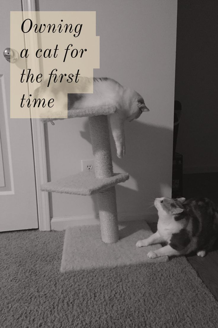Some advice on being a first time cat owner