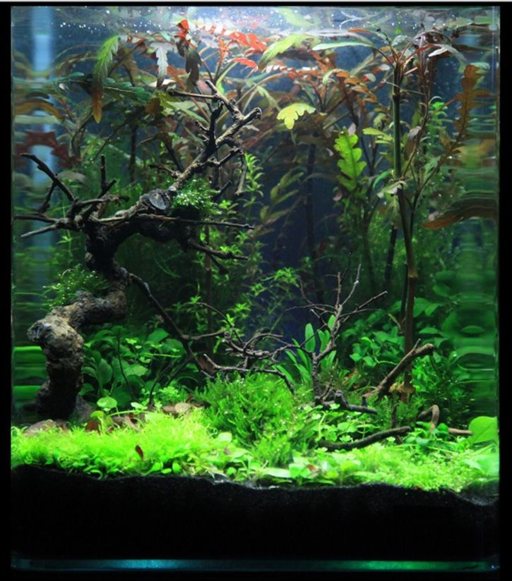 Planted fish tank acuarios pozas y plantas pinterest for Planted tank fish