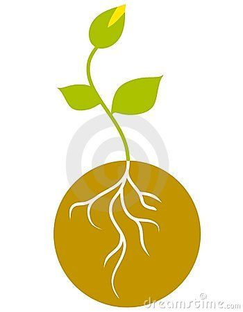 seed graphic - Google Search