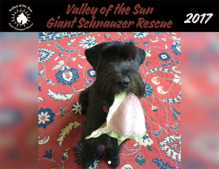 Valley of the Sun Giant Schnauzer Rescue 2017 Calendar - Yearbox Calendars