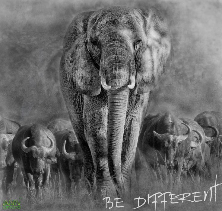 Dare to be different!  Be the real you, that is what truly matters!  www.avaniamore.com