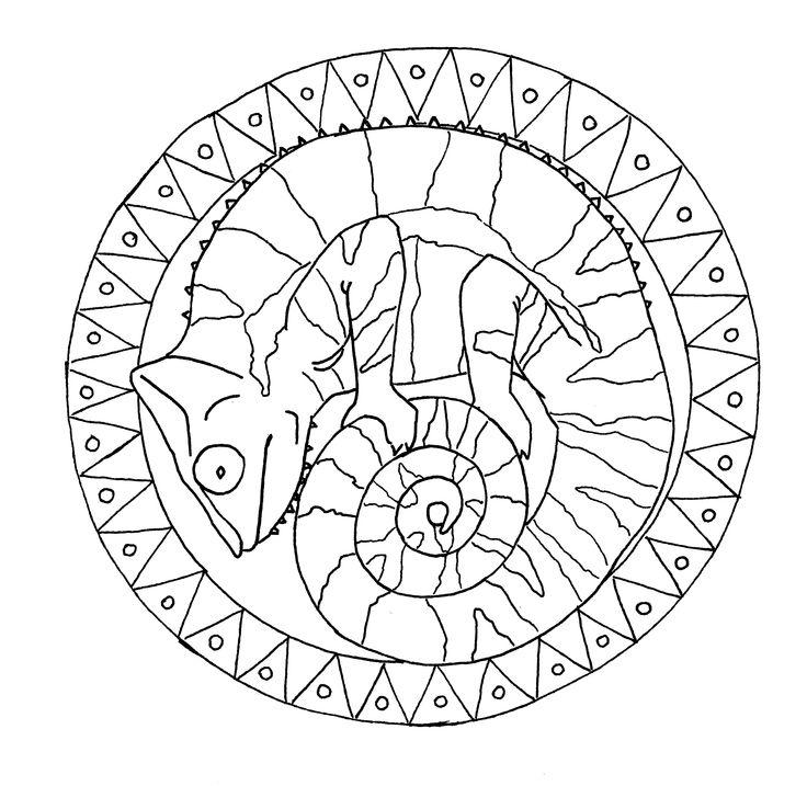 Chameleon Outline Tattoo: 209 Best Images About Mandalas On Pinterest