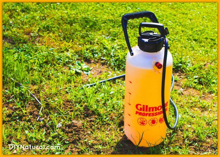 Homemade garden bug spray natural hot pepper solution