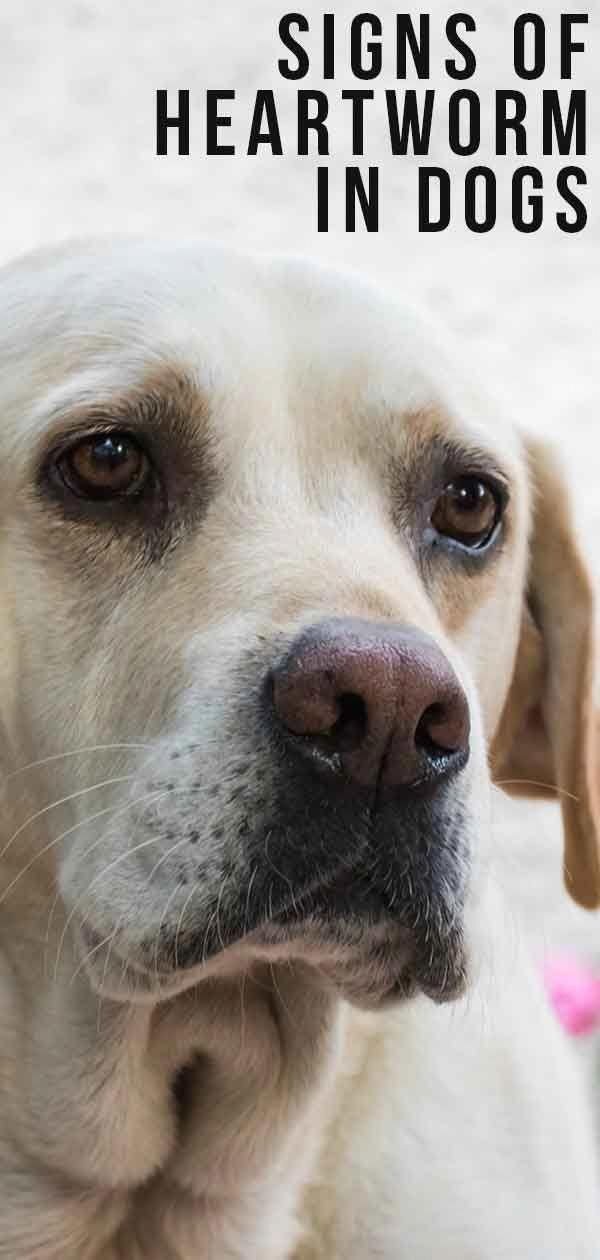 Pin On Dog Training And Tips