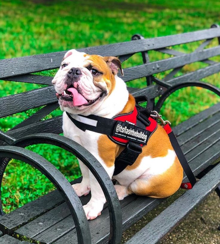 Click VISIT to follow our Amazon store of Bulldog