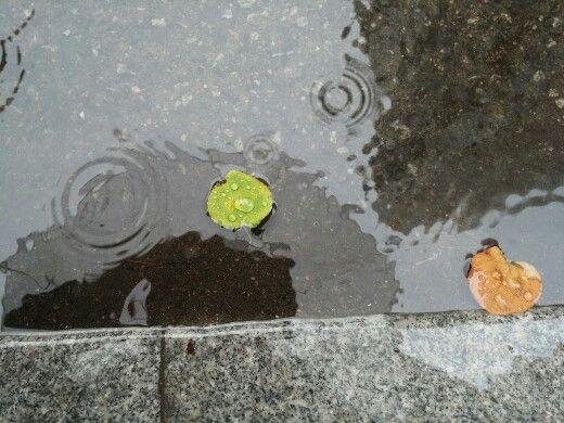 비 온날 여김없이 나뭇잎에도