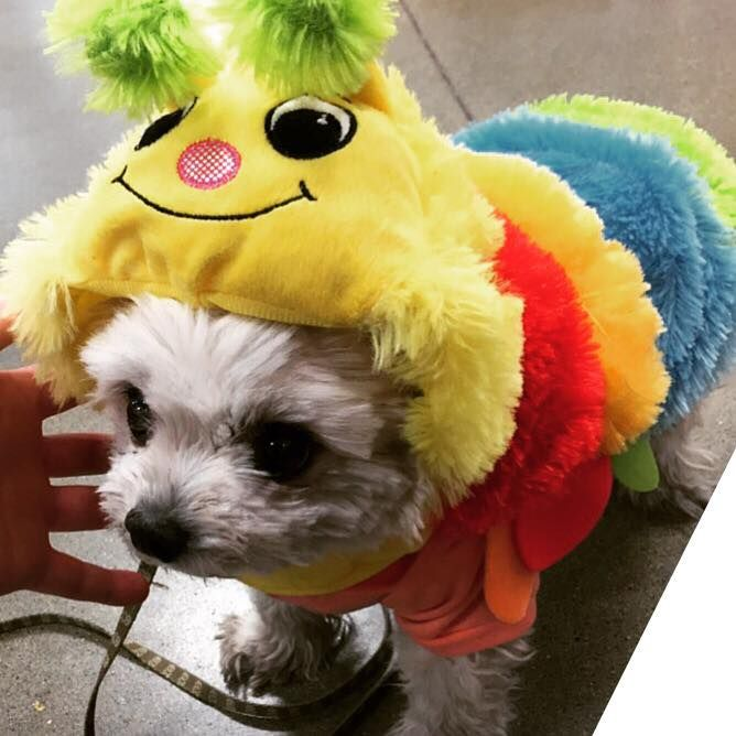 Cher the colorful caterpillar!