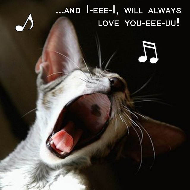 45 best images about Singing Animals on Pinterest ...
