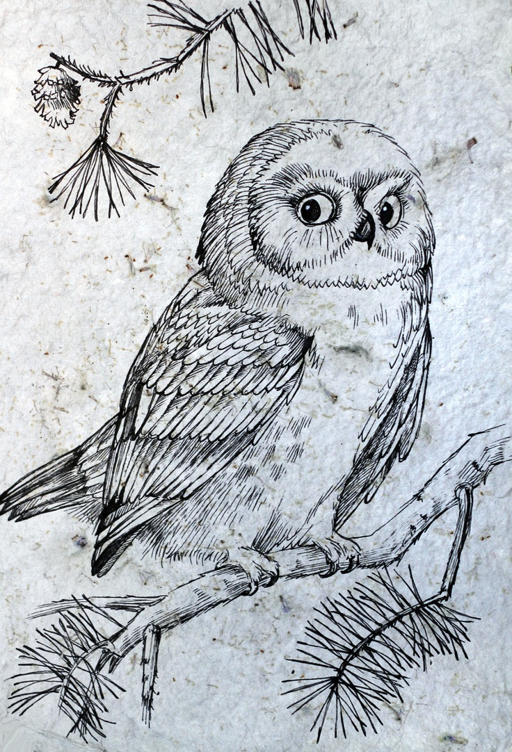 99 best owl sketches images on pinterest drawings owl drawings