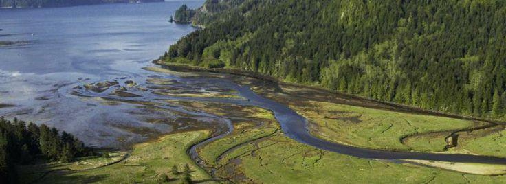 Vancouver Island, het grootste eiland aan de westkust van Noord-Amerika, is een paradijs voor natuurliefhebbers. Bergen, dichte bossen, mere...