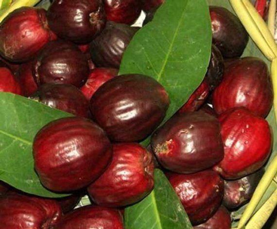 3 Seeds Syzygium Malaccense Malay Rose Apple Tropical Fruit Etsy Fruit Apple Fruit Fruit Seeds