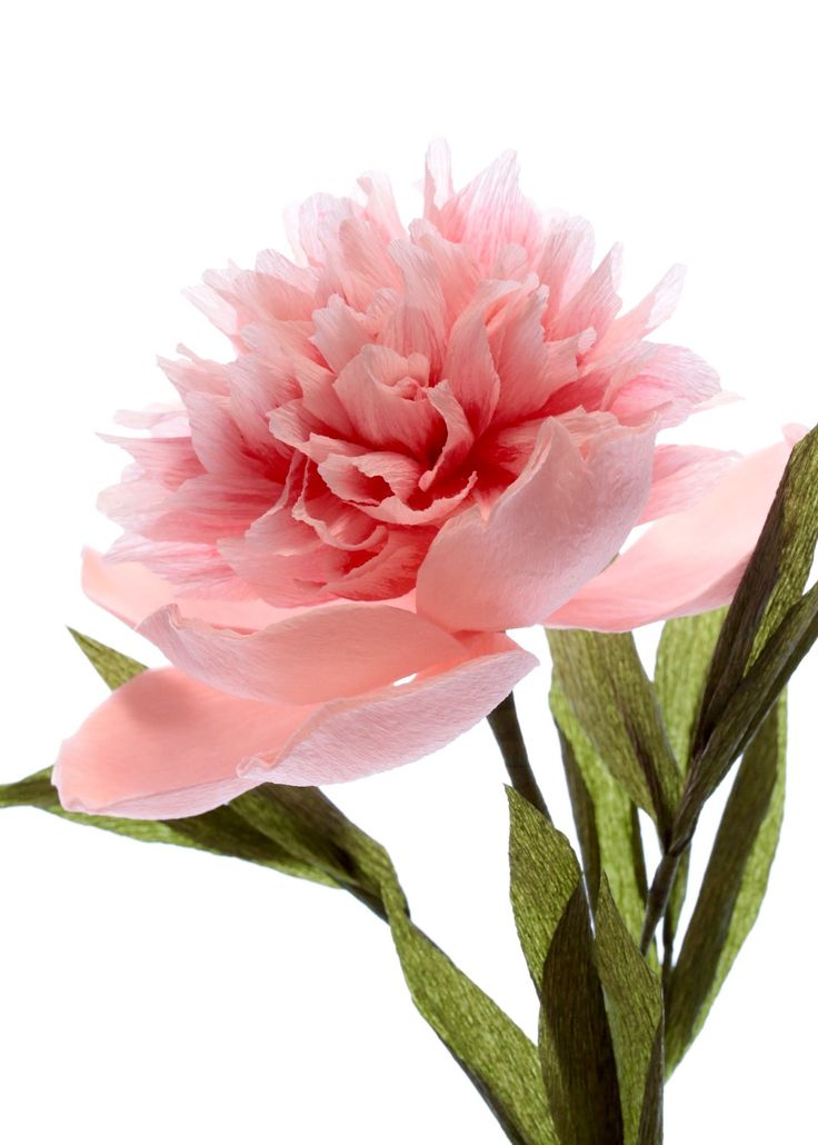 Crepe paper peony, handmade and photographed by Papetal