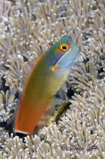 Blenny - they are super cute and easy to keep in an