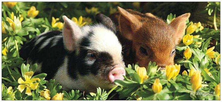 http://fmlkunst.home.xs4all.nl/varkenskaarten1/varkenskaarten1.htm - biggetjes