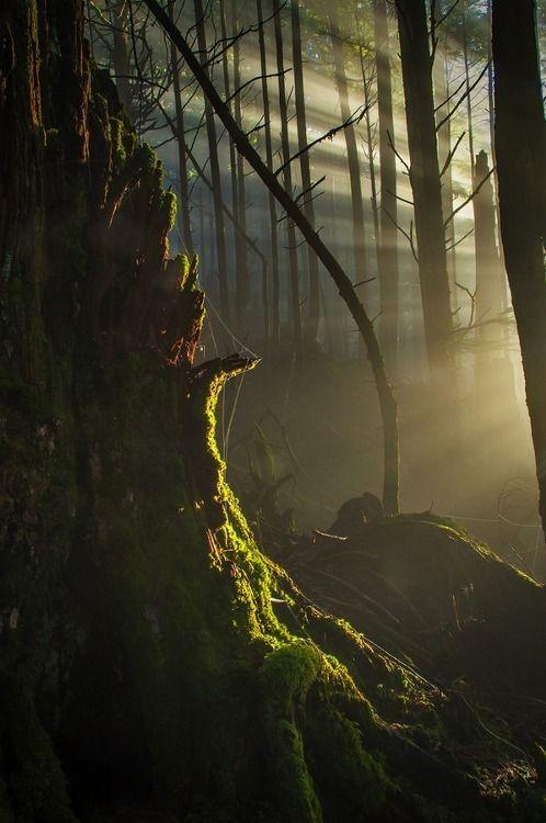 The Broken Down By Carlos Rojas; Ketchikan. Alaska Forest Sunlight.