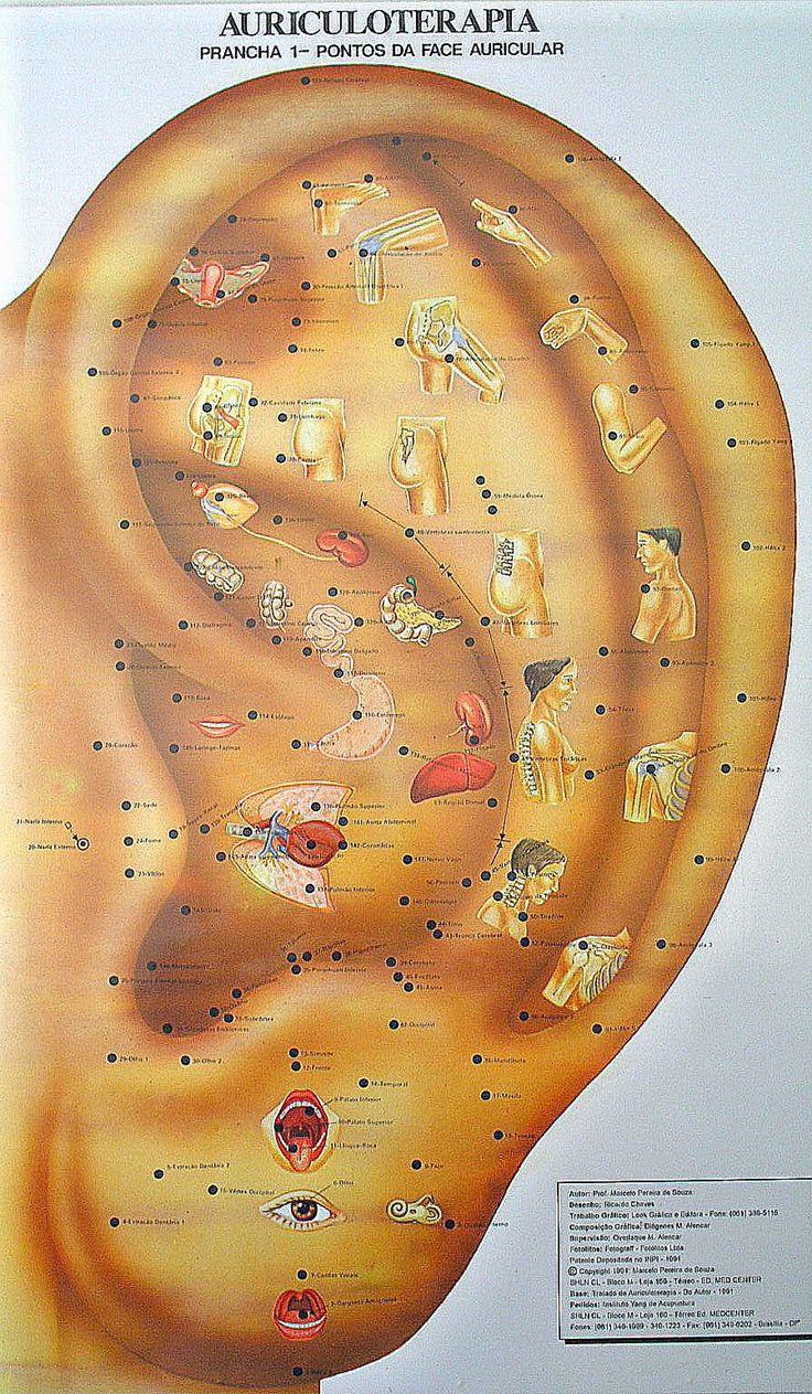 AURICULOTERAPIA               TERAPIA HOLÍSTICA (Terapia = harmonizar, equilibrar; Holística = do grego holus: totalidade) é mais Qual...