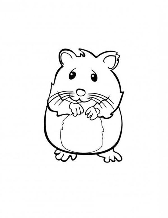 Baby Hamster Coloring Pages Tikus Belanda Halaman Mewarnai Hamster