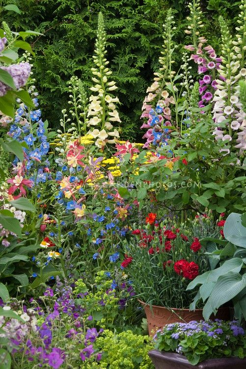 foxglove, delphinium, ladys mantle, carnation, alchillea, hosta, ageratum, columbine