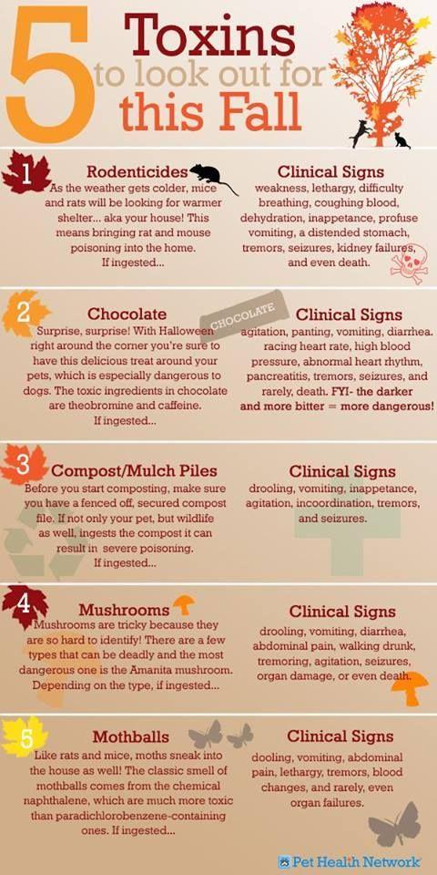 5 Fall Toxins to look out for. #AnimalHospital #Veterinarian #Pets #KAH #FrederickMaryland #KingsbrookAnimalHospital #Vet #ToxicToPets #PoisonControl #PetSafety #SeasonalToxins #FallToxins