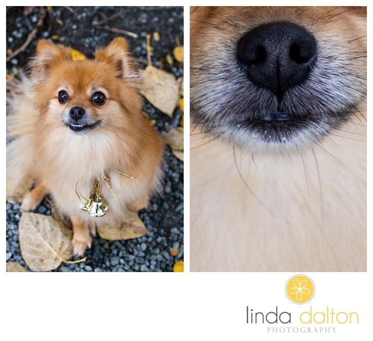 Wellness Dog Food For Pomeranians