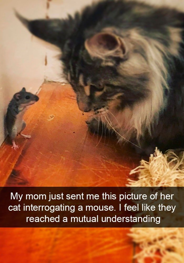 24 Cat Snapchats That Remind Us Why Cats Are So Awesome