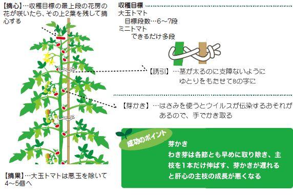 JA京都 - トマト・ナス・キュウリの栽培