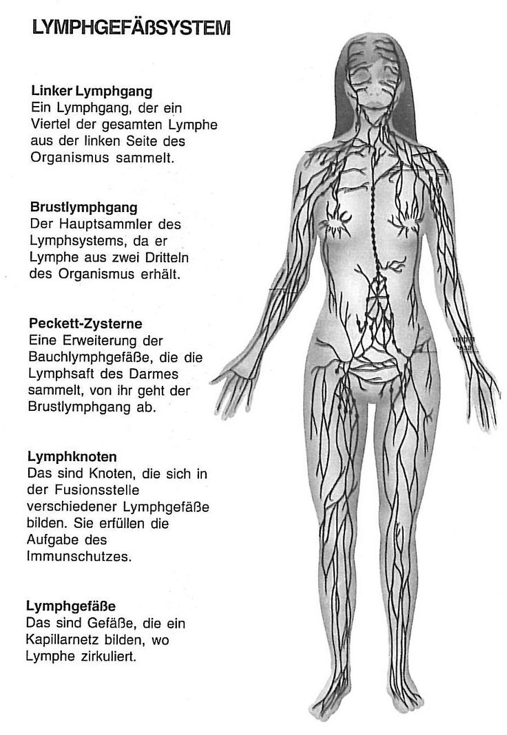 16 best NaWi images on Pinterest | Anatomie, Elektronenmikroskop und ...
