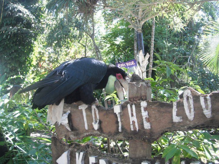Mr Tucan just had to say goodbye after visiting the Bali zoo