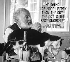 Image result for anarchist Wildcat