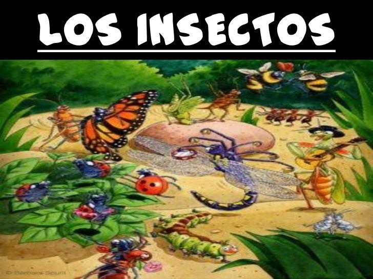 Los insectos para infantil