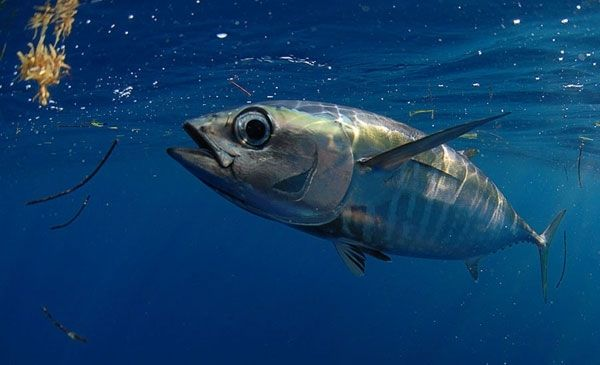 25 best images about fish photos on pinterest fraternity for Whiting fish florida