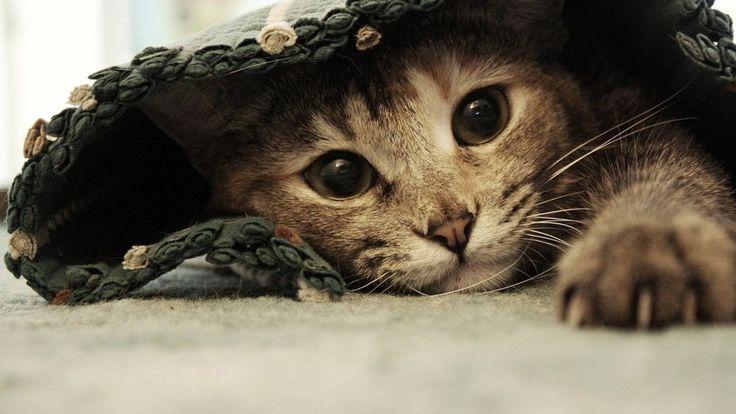 fondo hd gato bajo alfombra by VITICO TMC on 500px