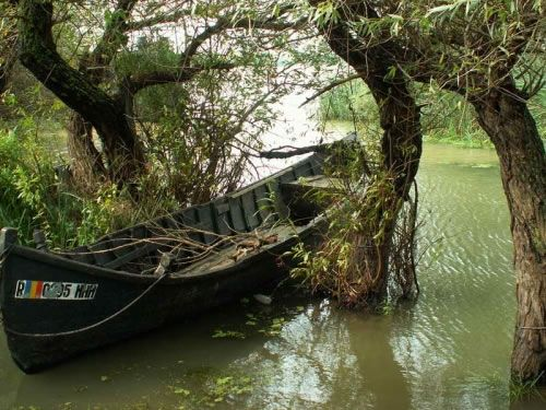 Danube Delta boat in the trees.     greenpacks.org