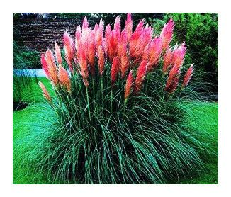 Decorative Grasses for Landscaping | Ornamental Grasses