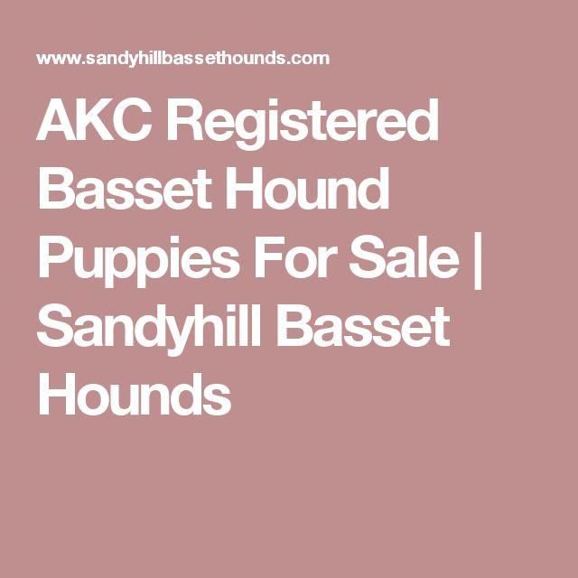 AKC Registered Basset Hound Puppies For Sale | Sandyhill Basset Hounds
