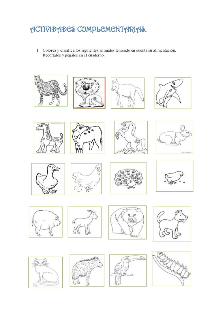 ACTIVIDADES COMPLEMENTARIAS. 1. Colorea y clasifica los siguientes animales teniendo en cuenta su alimentación.    Recórta...