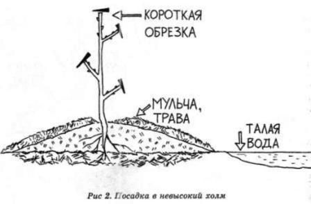 Посадки саженцев в суровом климате - Сады Сибири