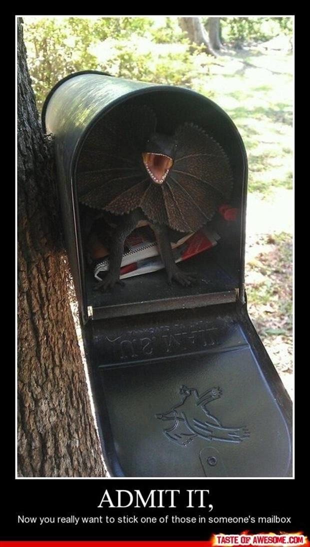 : Jurassic Parks, April Fools Day, Pranks, Funny Stuff, Mailboxes, Funnies, So Funny, Lizards, Mail Boxes