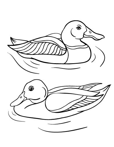 Printable Duck Coloring Page Free PDF Download At Coloringcafe