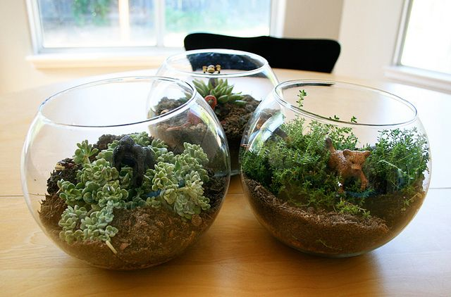 Make kid-friendly terrariums with your students for Earth Day