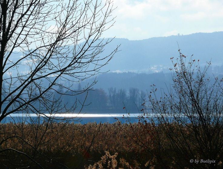 am Greifensee (© Buelipix)