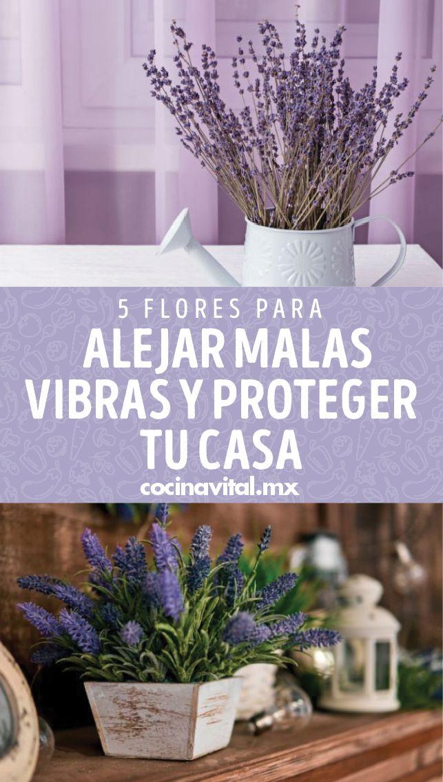 Si quieres que la buena energía invada tu casa, lo mejor es tener estas flores protectoras del hogar ¡Además descubre cómo deberías usarlas! Feng Shui, Lettering, Ariel, Deco, Blog, Gardens, Magic Herbs, Health Recipes, Growing Up