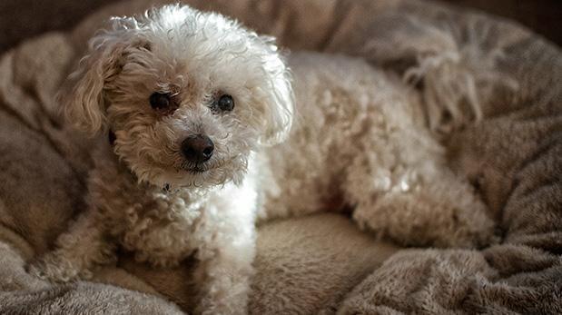 ¿Sabes qué hay en la cama de tu perro?
