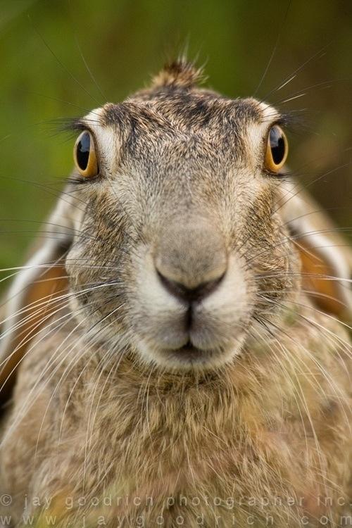 Easter Black Jack Rabbit 88