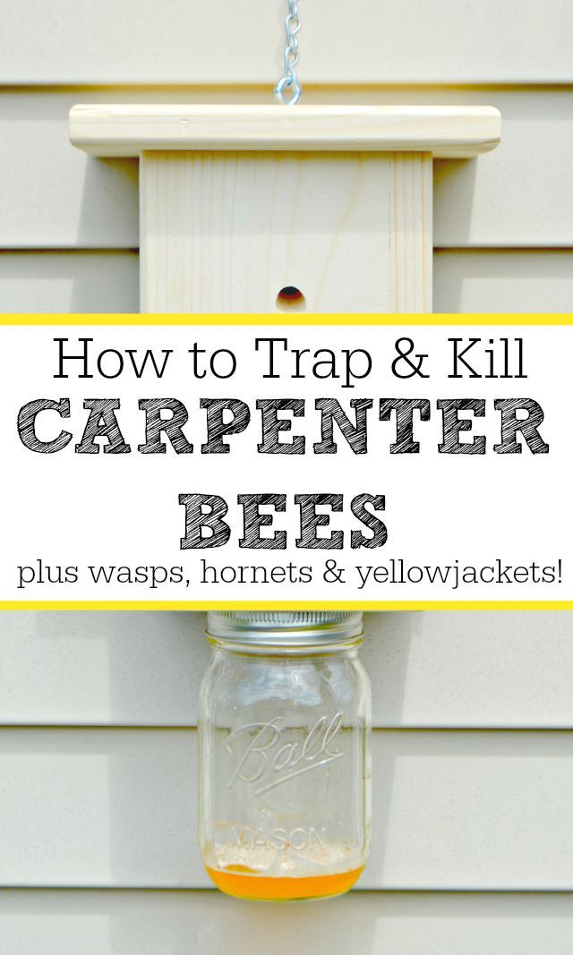Natural Ways To Prevent Carpenter Bees