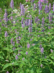 Flower Garden Ideas Wisconsin 20 best wisconsin flowers images on pinterest | wisconsin, flowers